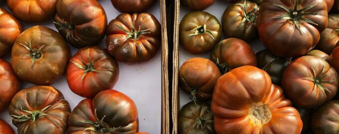 помидоры кумато